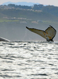 Whale Watching Garden Route