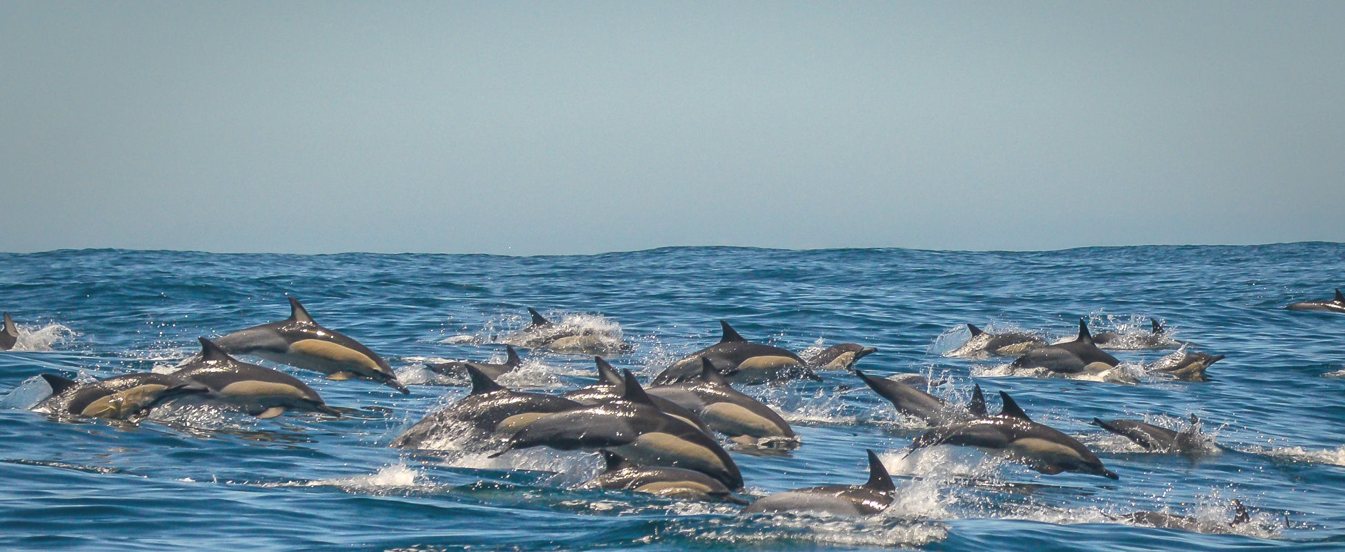 all about dolphins ocean odyssey