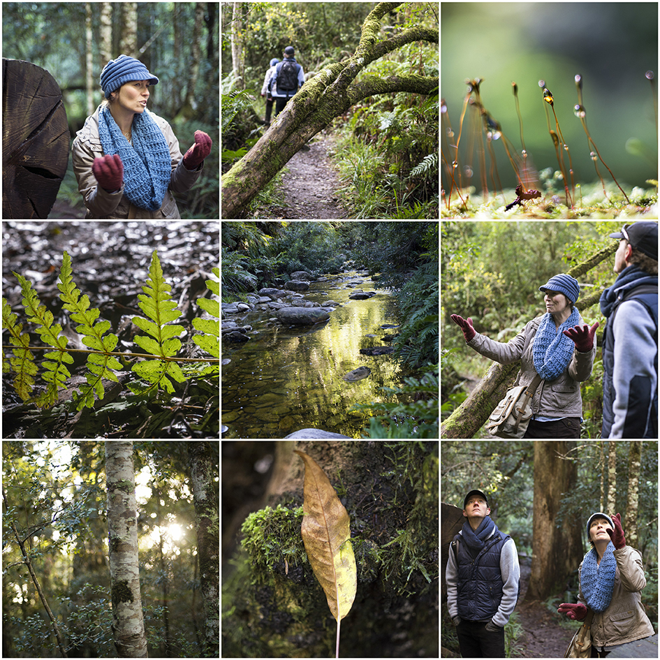 Guided Forest Tours, Knysna